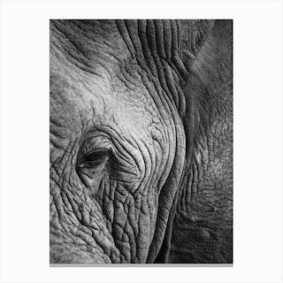 Elephant Study Canvas Print
