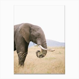 Kenya Elephant Canvas Print