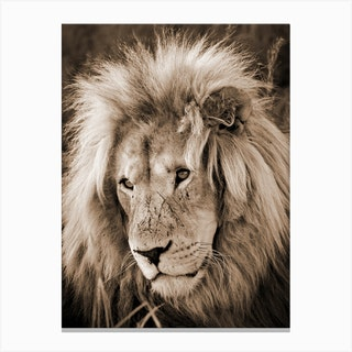 Lion King Sepia Canvas Print