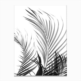 Palm Fronds in Black & White Canvas Print