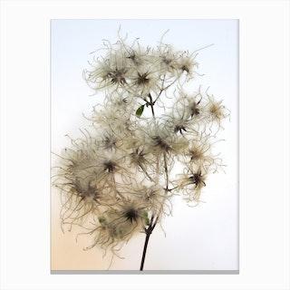Florales · Plant End 8 Canvas Print