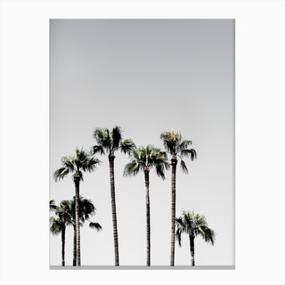 Palm Trees 5 Canvas Print