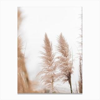 Reeds Dreamy Pampa Grass Canvas Print