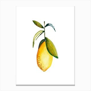 Lemon 3 Canvas Print
