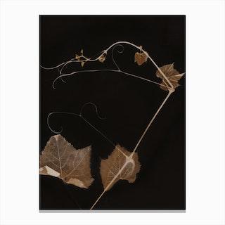 Sepia Grapevine Canvas Print