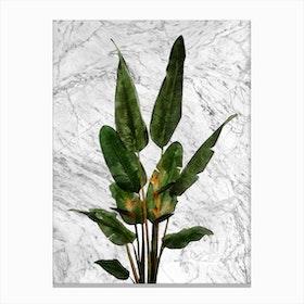Bird of Paradise Plant on White Marble Canvas Print