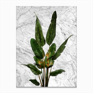 Bird of Paradise Plant on White Marble Canvas Print