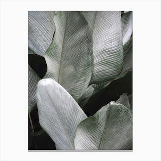 Tropical Silver Leafs Canvas Print