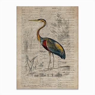 Heron Dictionnaire Universel Dhistoire Naturelle Canvas Print