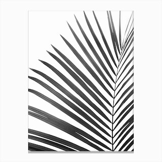Palm Leaf Black Canvas Print