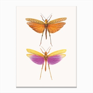 Insects I Canvas Print
