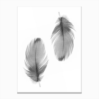 Double Feathers Canvas Print