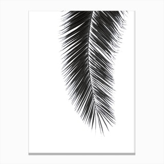 Black Palm in Canvas Print