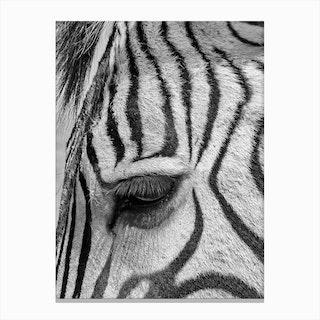 Zebra Eyelash Canvas Print