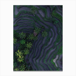 Tropical Risefields From Above Canvas Print