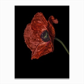 Poppy Red 04 Canvas Print