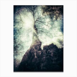 A Tree Of Ta Prohm Canvas Print