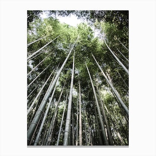 Bamboo Forest Ii Canvas Print