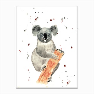 Mr Koala Canvas Print