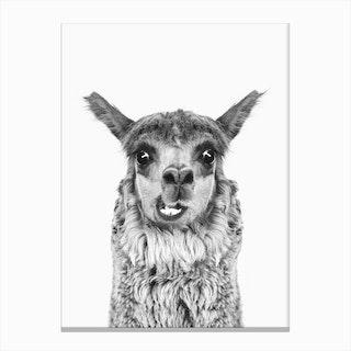 Happy Llama BW Canvas Print