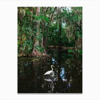Charleston's Magnolia Plantation VI Canvas Print