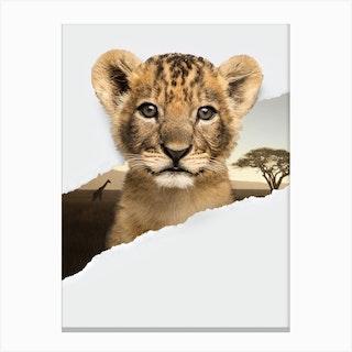 Lion Cub Torn Paper Canvas Print