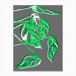 Monstera Obliqua In Grey And Green Canvas Print