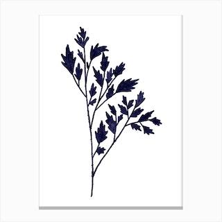 Mono Fern Canvas Print