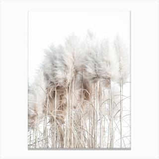Pampas Grass I Canvas Print