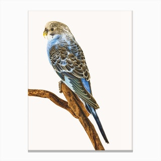 Birds IV Canvas Print
