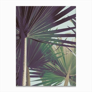 Palm I Canvas Print