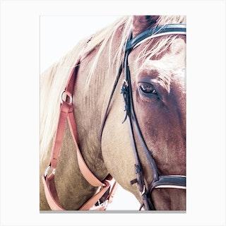 Horse III Canvas Print