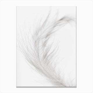 White Feather 2 Canvas Print
