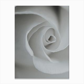 White Rose Detail Canvas Print