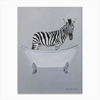 Zebra In Bathtub Canvas Print