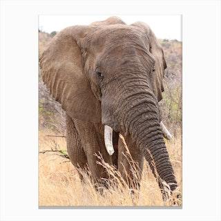 Elephant Portrait Color Canvas Print