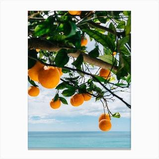 Amalfi Coast Oranges Iv Canvas Print