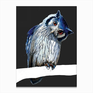 The Northern White Faced Owl Canvas Print