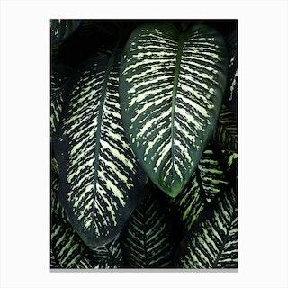 Jungle1 Canvas Print