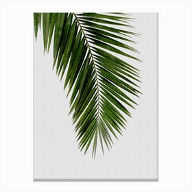 Palm Leaf I Canvas Print