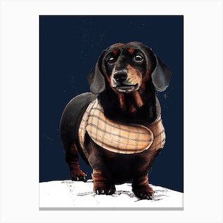 Arthur The Dachshund On Midnight Blue Canvas Print