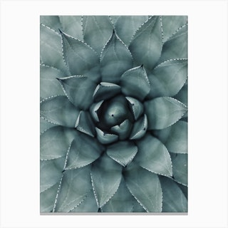 Hypnotic Agave Plant Canvas Print