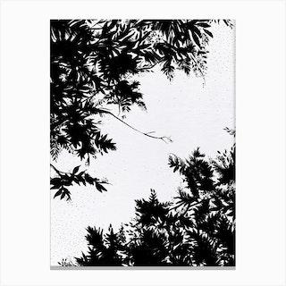 Black Night Sky Canvas Print