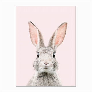 Bunny Face Blush Canvas Print