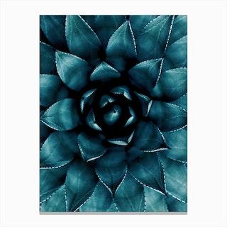 Cactus No.9 Canvas Print