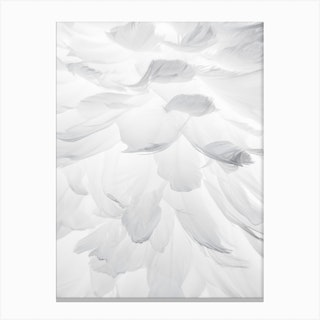 Feathers II Canvas Print