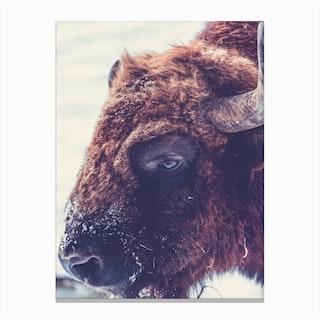 Real Bull Canvas Print