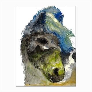 Icelandic Horse Canvas Print