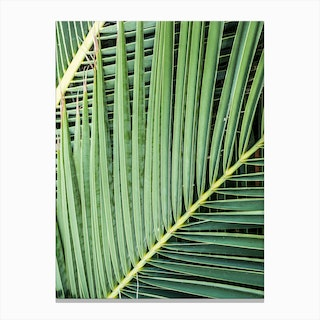 Green Tropics In Canvas Print