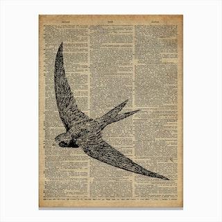 Swallow Bird Canvas Print